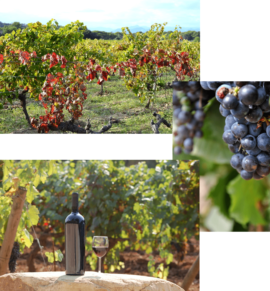 Les vins de Porquerolles